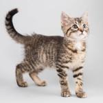 kitten Terri