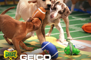 pups in geico stadium