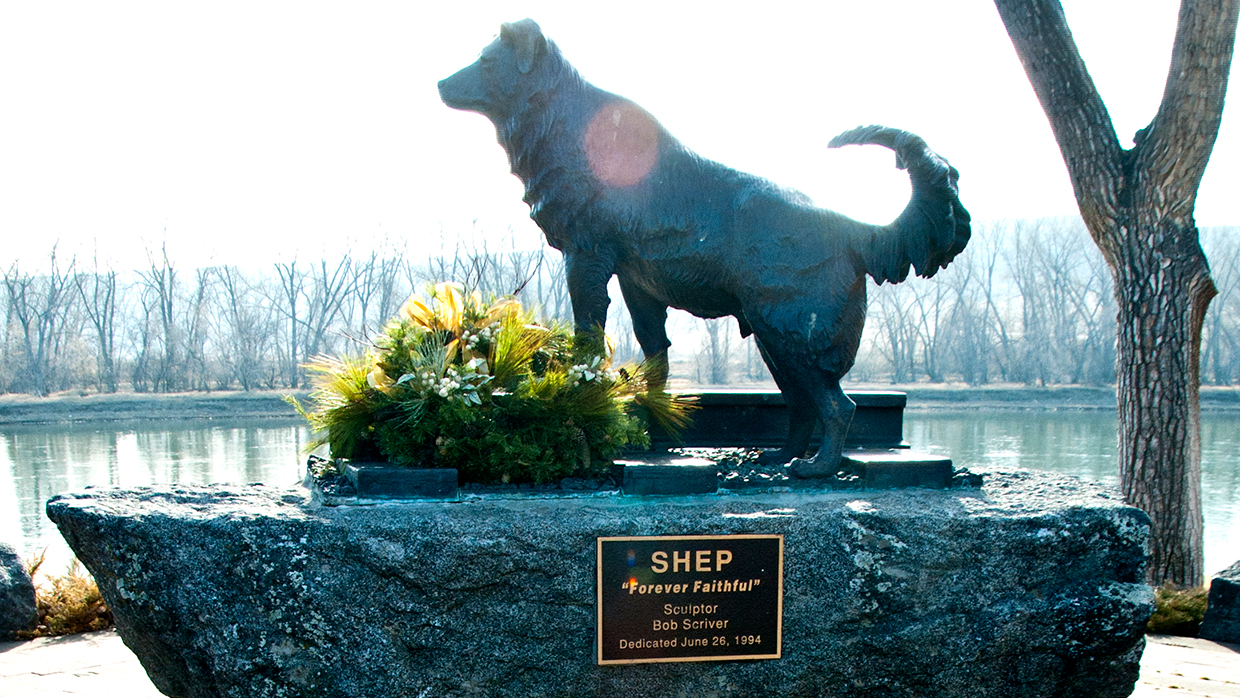 forever faithful shep