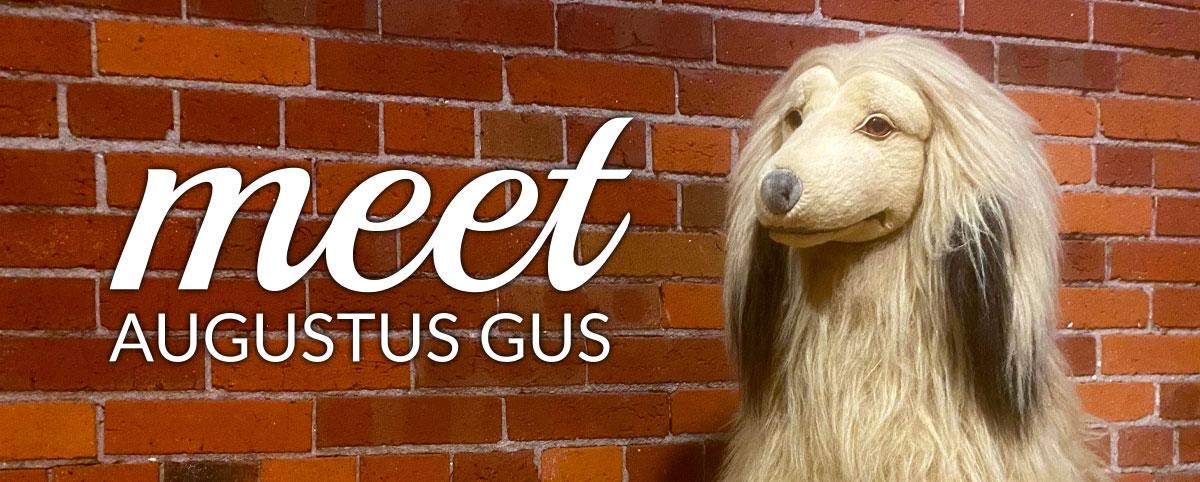 Meet Augustus Gus